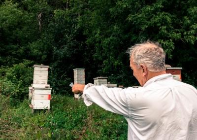 Dan explaining the hives
