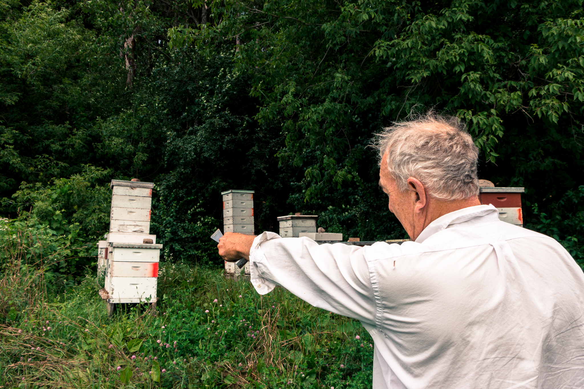 wisconsin beekeeping and honey