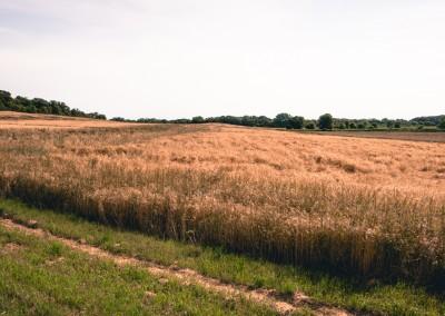 Honey Valley, East Troy, WI crop