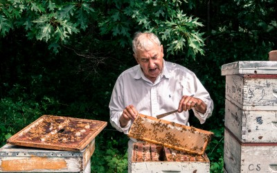 Beekeeping for Beginners Workshop March 2019