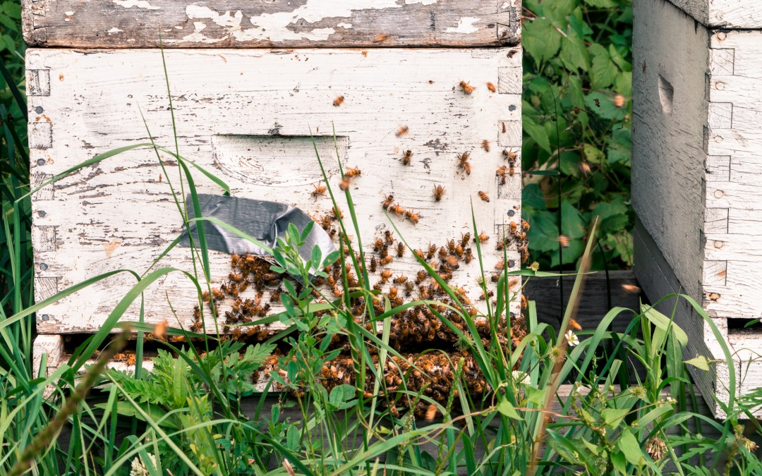 Beehive With Honey Bees, Beekeeping Class for Beginners