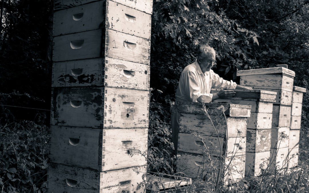 Beekeeping for Beginners Workshop March 2018