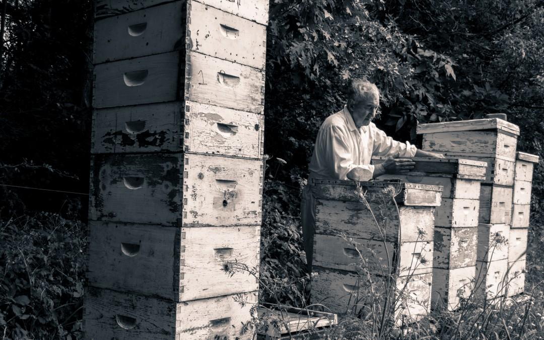 Beekeeping for Beginners Workshop March 2018